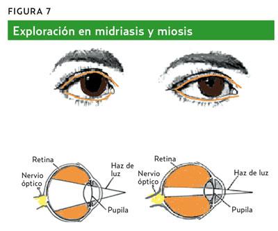 vena ocular definicion